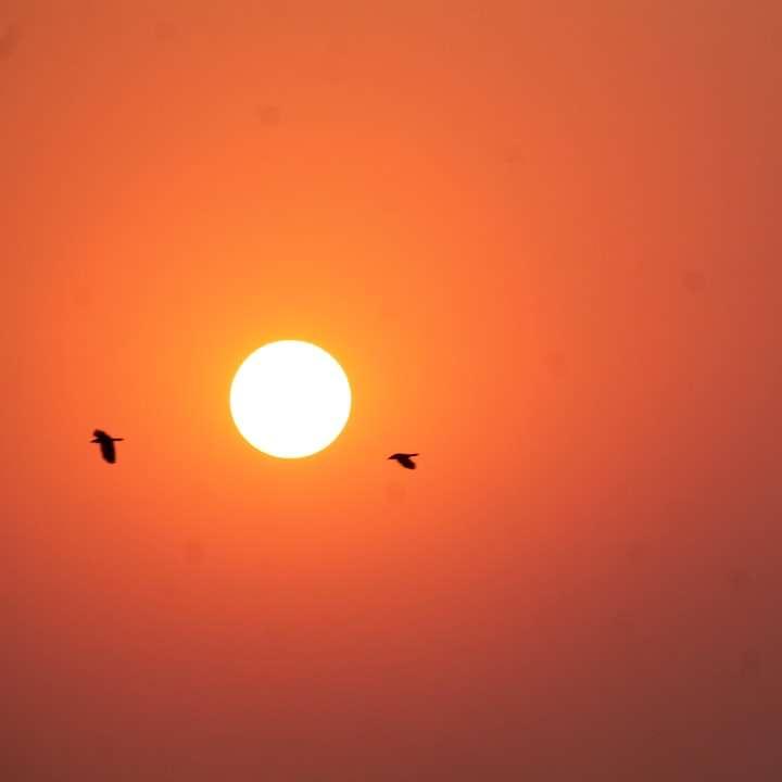 pták letí ke slunci -  (10×10)