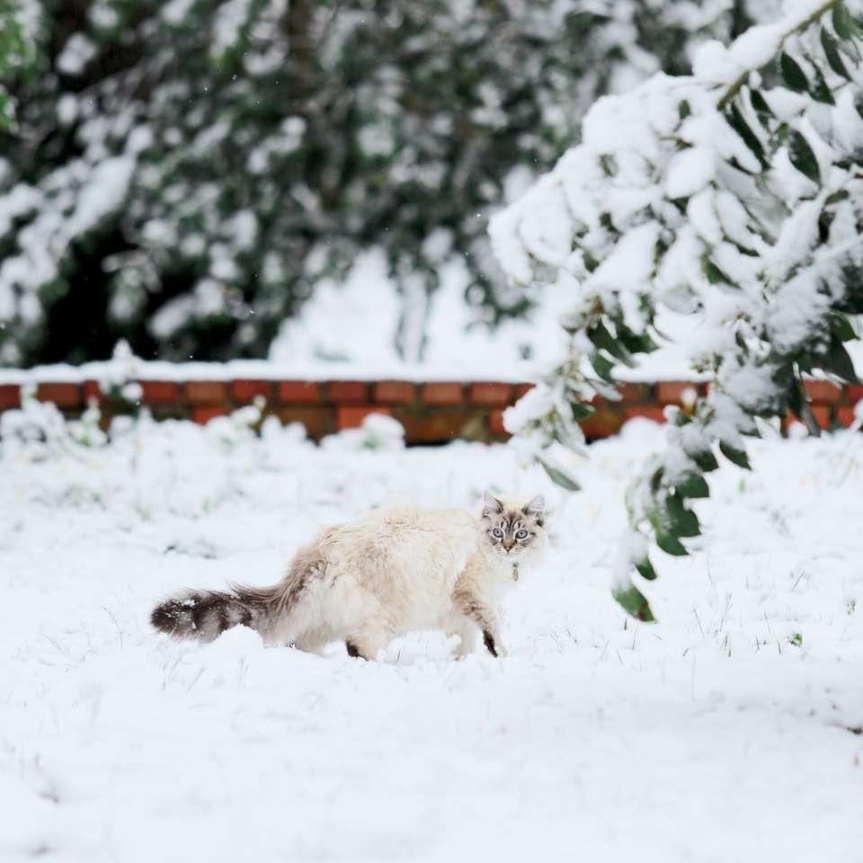Gato en la nieve -  (10×10)