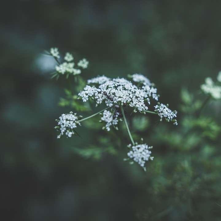 witte bloem -  (10×10)