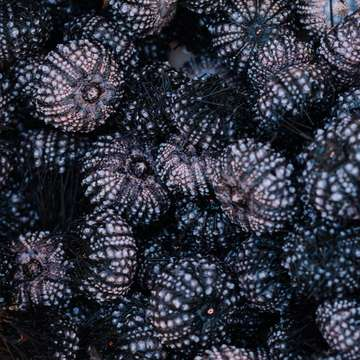 Black Snails mayby algo más