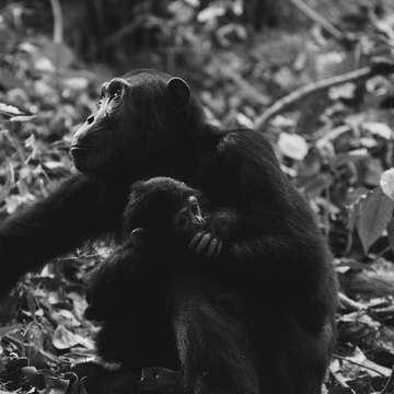 Monkey with a little monkey