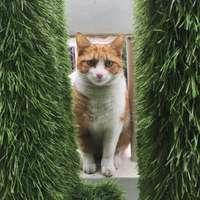 Il famoso gatto