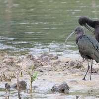 Ibis em Eure et Loir (França