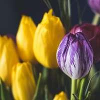 Påsk blommar