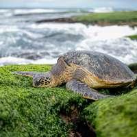 hnědá želva poblíž vody během dne