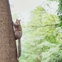 écureuil brun sur bois