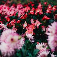 Belo jardim de flores