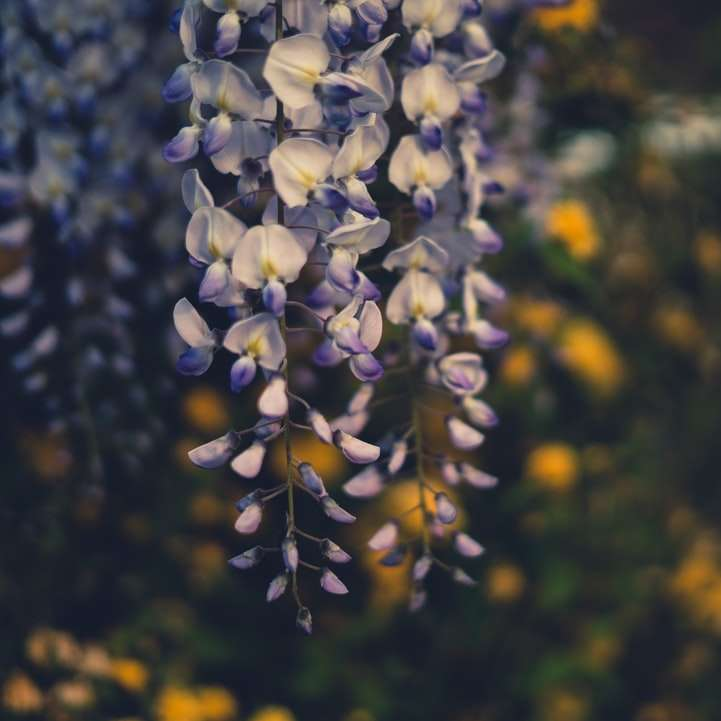 Λουλούδι Pt. 01