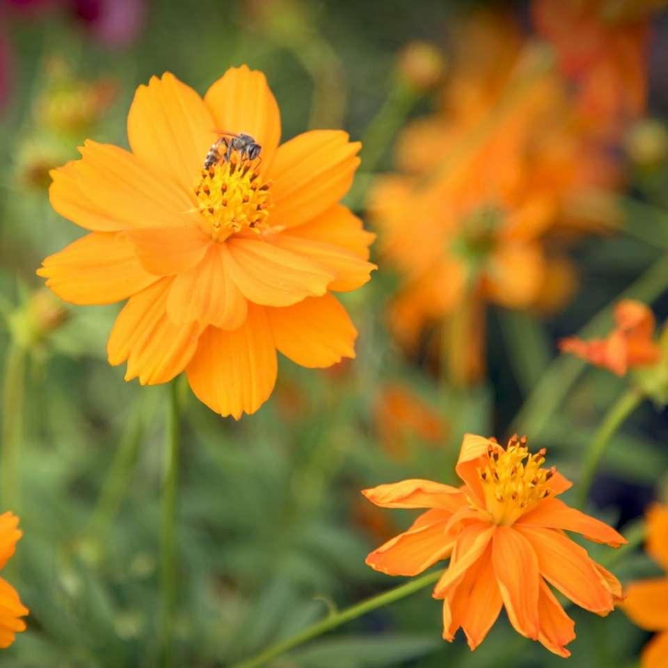pomarańczowy płatek kwiatu - Nawet maleńka pszczoła może dokonać wyboru, zawsze mamy wybór w większości sytuacji (7×7)
