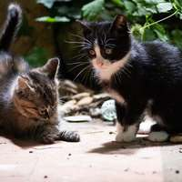 giochi di gattini!