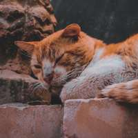 oranje en witte kat liggend op bruine rots