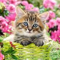 piccolo gattino in un cestino
