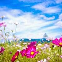 lunca cu flori de vara