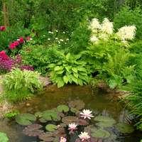 grădină de flori lângă lac