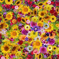 covor de multe flori