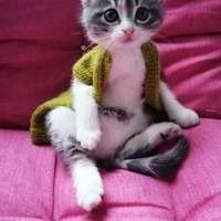 piccolo gattino con un giubbotto