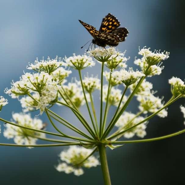 borboleta empoleirada em uma flor