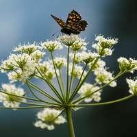 pillangó ült a virágon
