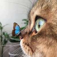 uma borboleta azul e um gatinho