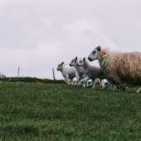 Ιρλανδική μαφία