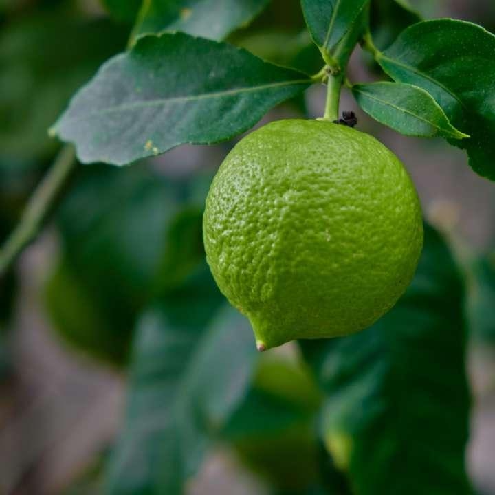 Citron. Citronnier.