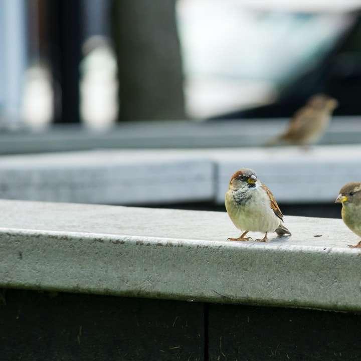 două păsări cocoțate pe marginea de beton
