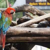 Papegaai in boom
