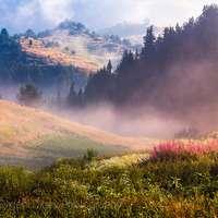 landschap - perfecte ochtend