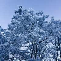 witte kersenbloesem boom onder de blauwe hemel overdag