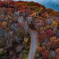 letecký snímek šedé silnice mezi stromy