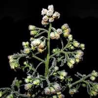witte en groene bloem in close-up fotografie