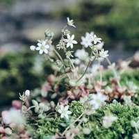fehér virágok, zöld levelekkel