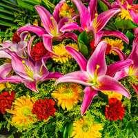 fialové a žluté květy se zelenými listy