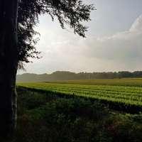 πράσινο γρασίδι πεδίο κάτω από άσπρα σύννεφα κατά τη διάρκεια της ημέρας