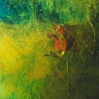 rana marrón sobre la hierba verde
