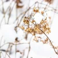 witte bloem op bruine steel