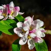 fehér és rózsaszín virág tilt shift lencsében
