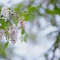 flores brancas em lente tilt shift