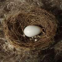 ovo branco no ninho marrom