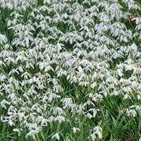 campo de flores verdes e brancas durante o dia