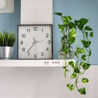 groene plant naast witte wandtegels