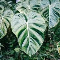 gröna och vita bladväxter