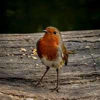 orange and white bird on brown wooden surface during daytime