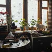 grüne Topfpflanze auf schwarzem Holztisch
