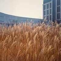 braunes Weizenfeld nahe weißem Betongebäude
