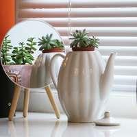 witte keramische theepot met groene plant op bruine houten tafel