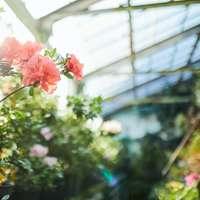 rosa Blüten mit grünen Blättern