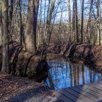 bacino di legno marrone sul fiume circondato da alberi