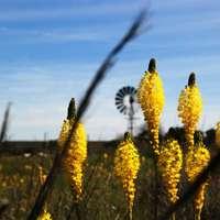 gele bloemen onder blauwe hemel overdag