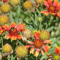 oranje en zwarte vlinder op oranje bloem